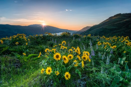 Columbia River Gorge, River, Coast, flowers, landscape