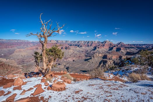 Arizona, Grand Canyon, the mountains, rock, tree, landscape
