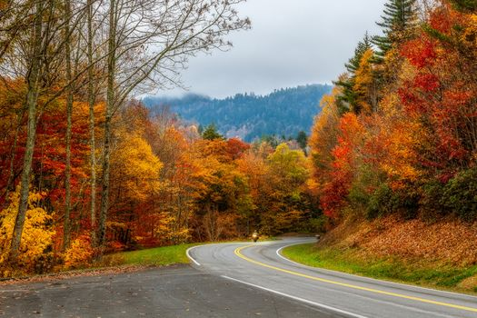 Smoky Mountains National Park, Gray Smoki Mauntins Park, Tennessee, autumn, forest, trees, road, landscape