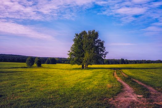 field, road, tree, landscape