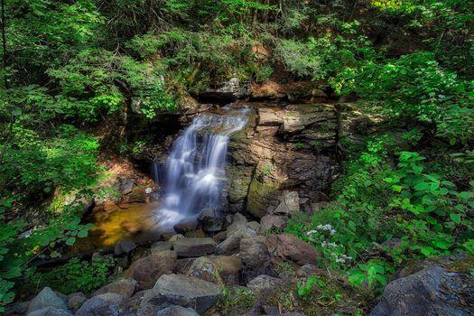waterfall, rock, trees, nature, landscape, Ricketts Glen State Park, Pennsylvania, Ricketts Glen State Park