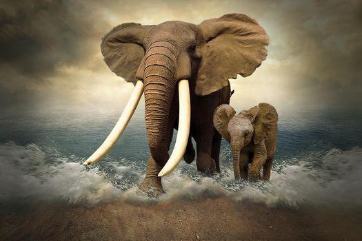 sea, Coast, elephants, art