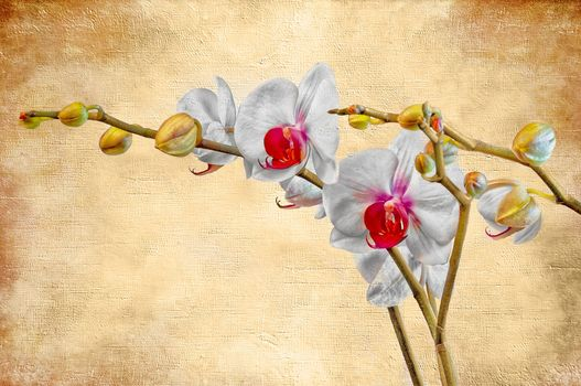 flower, orchid, background, art