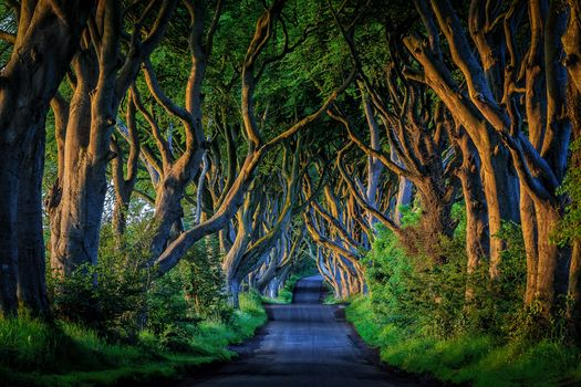 Northern Ireland, road, alley, trees, landscape