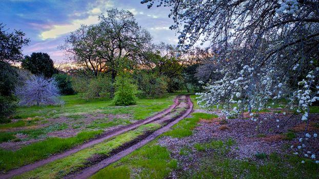 sunset, garden, park, road, trees, landscape painting