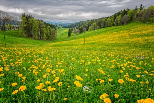 field, hills, grass, flowers, bloom, trees, landscape