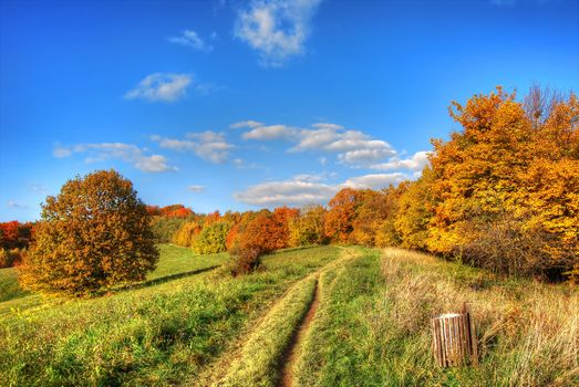 autumn, field, road, trees, landscape