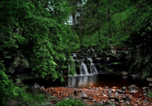 forest, trees, stones, waterfall, landscape