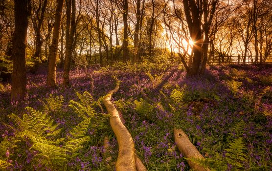 sunset, forest, trees, Hill, flowers, nature