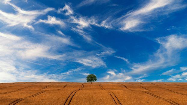 field, hills, tree, sky, landscape