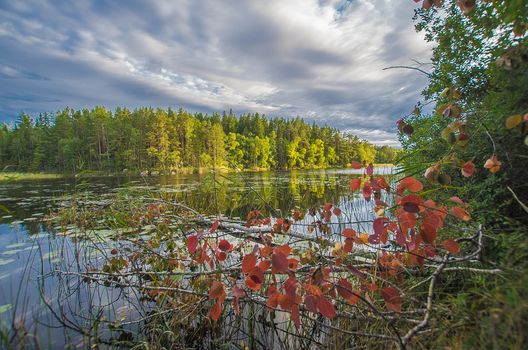 lake, autumn, forest, trees, landscape