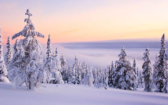 зима, деревья, сугробы, закат, туман, пейзаж