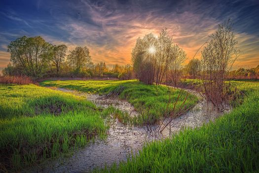 Moscow region, Russia, Moscow region, sunset, trees, water, canvas, swamp, landscape