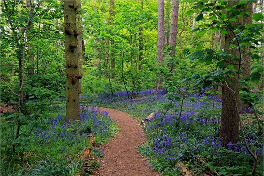 forest, trees, path, flowers, nature