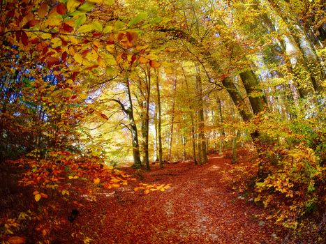autumn, forest, trees, landscape