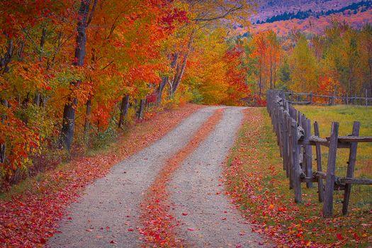 autumn, forest, road, trees, landscape