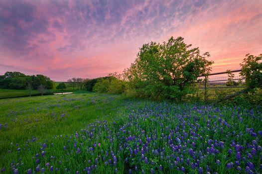 sunset, field, trees, flowers, water, landscape