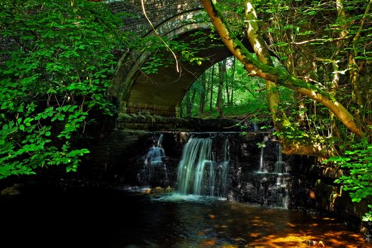 forest, trees, waterfall, rock, water, nature, bridge, arch, landscape