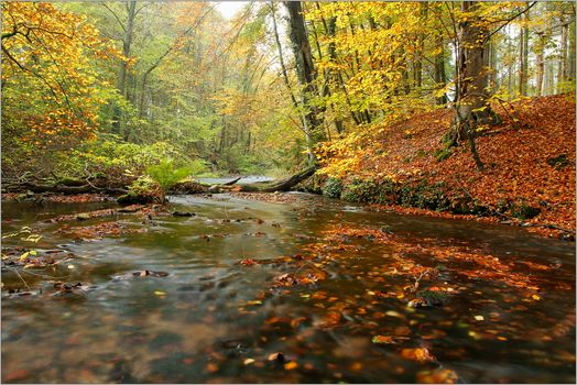 autumn, forest, trees, River, landscape, nature