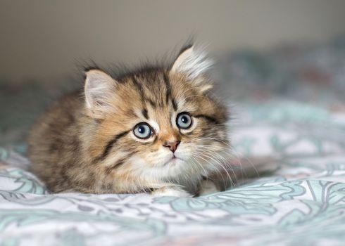 kitten, cat, cat, animal, sight