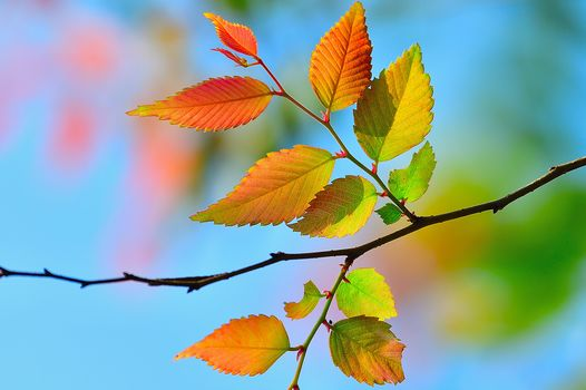 autumn, branch, leaves, nature