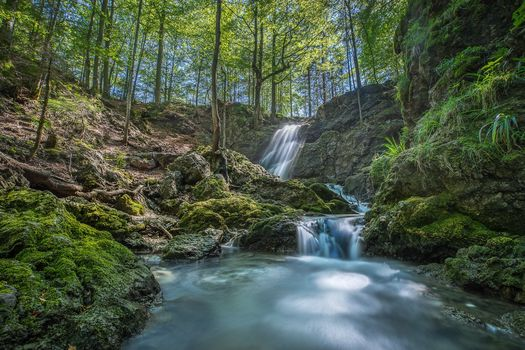 forest, park, trees, small river, waterfall, landscape, nature