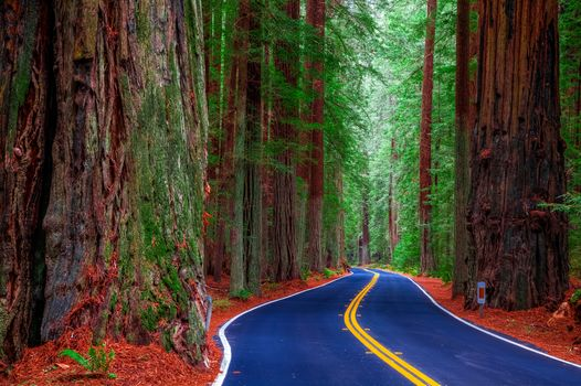 California, USA, forest, trees, road, landscape