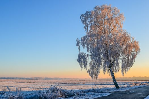 sunset, winter, field, tree, road, landscape
