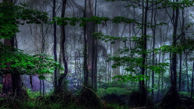 landscape, jungle, forest, mysterious forest, fog, trees