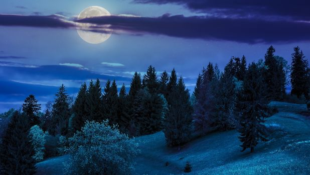 night, moon, forest, trees, landscape