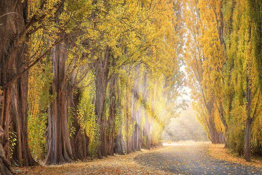 осень, дорога, аллея, деревья, солнечные лучи, пейзаж