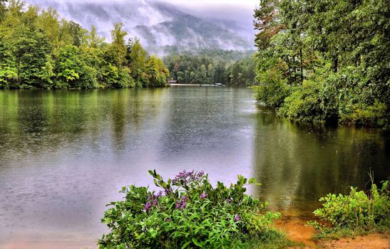 Table Rock State Park, lake, forest, trees, rain, flowers, nature, landscape