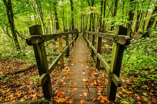 forest, trees, wood flooring, nature, landscape
