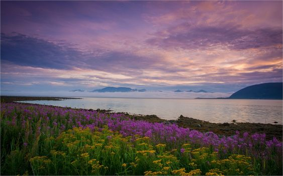 sunset, River, Coast, flowers, landscape
