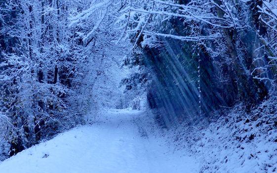 лес, деревья, дорога, зима, пейзаж