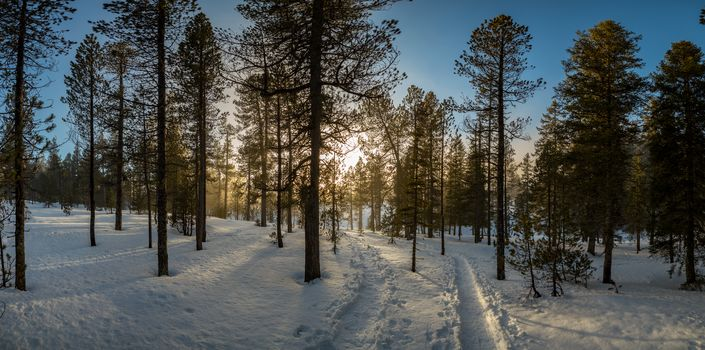 sunset, winter, forest, trees, snowdrifts, landscape