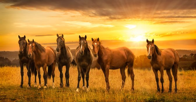 sunset, field, horses, horses, view