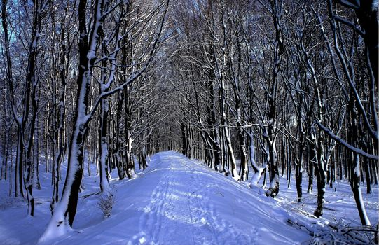 winter, forest, road, trees, landscape