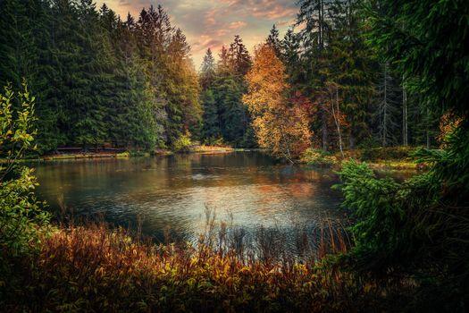 озеро, осень, лес, деревья, пейзаж, закат