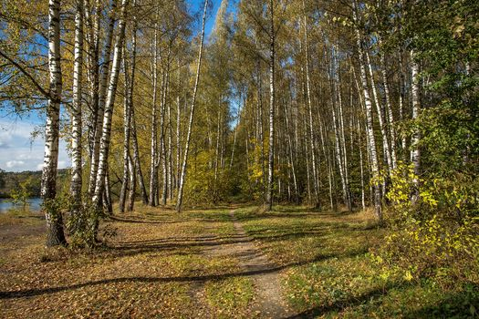 Arkhangelskoye, Krasnogorsk district, Moscow region, Russia, autumn, River, trees, road, landscape