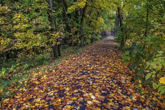 Arkhangelskoye, Krasnogorsk district, Moscow region, Russia, park, forest, road, trees, autumn, landscape