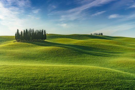 поле, холмы, деревья, пейзаж