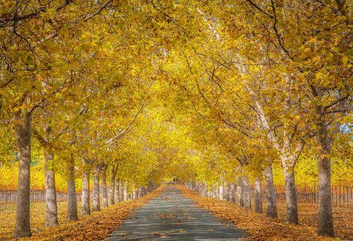 осень, дорога, деревья, аллея, пейзаж