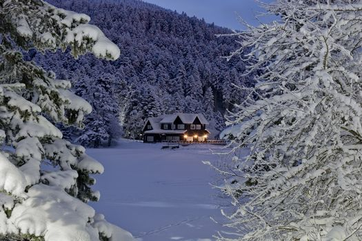 winter, snow, trees, lodge, snowdrifts, night, shine, trees in the snow, landscape