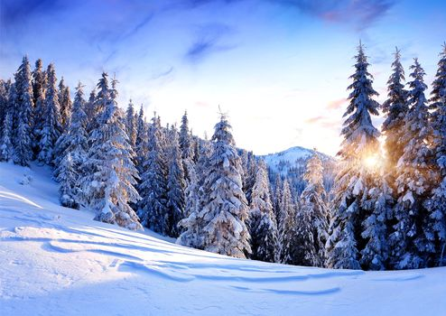the mountains, winter, snow, trees, snowdrifts, sunset, landscape