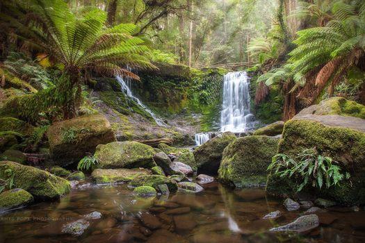 Tasmania, Australia, waterfall, forest, stones, trees, landscape