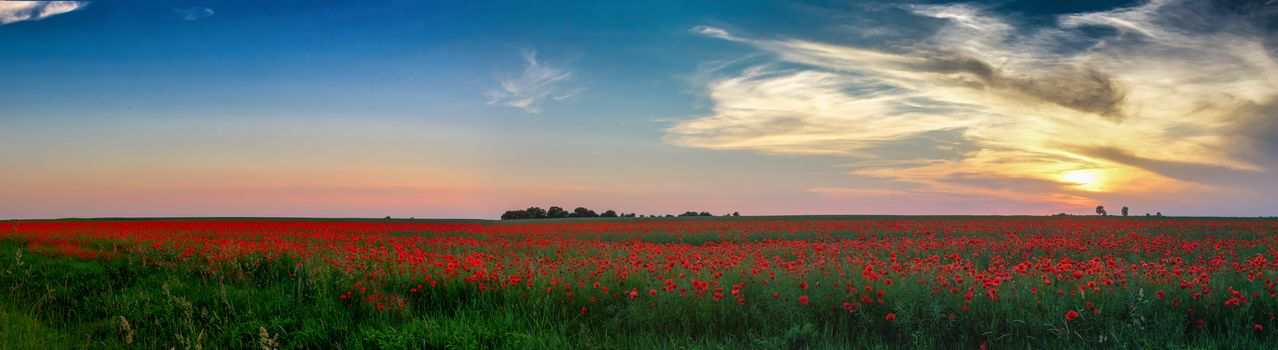 sunset, field, flowers, maki, view