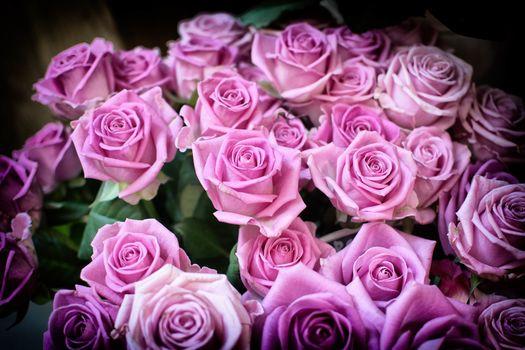 flowers, roses, flora, bouquet