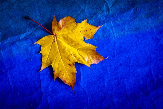 letter, Maple Leaf, autumn leaf