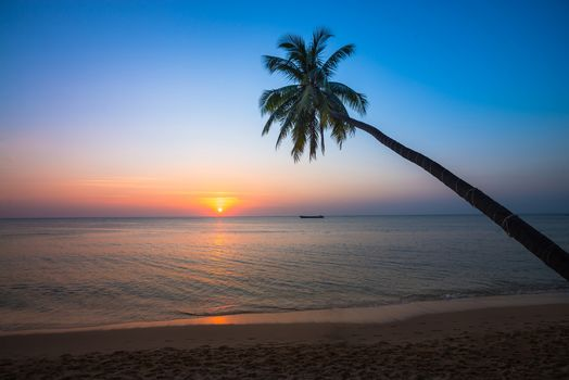 sea, sunset, Coast, palm, beach, landscape